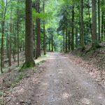 schöner Weg im Wald
